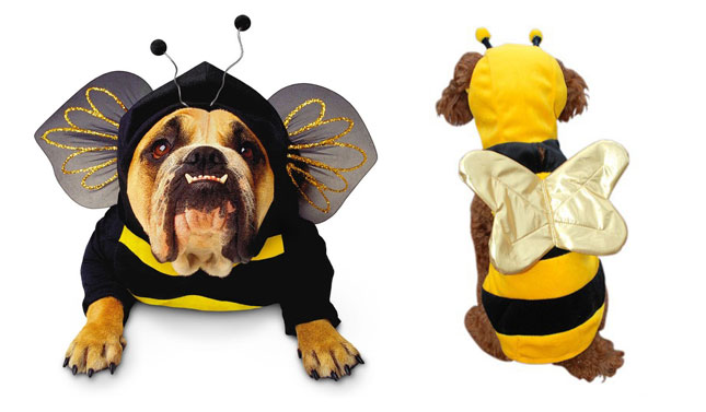 ¿Pueden los perros ser alérgicos a las abejas?