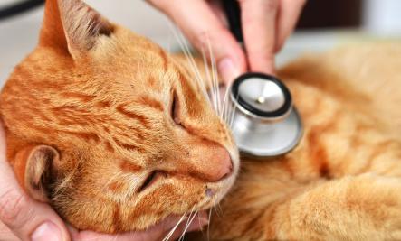 10 señales de advertencia de que su gato podría estar enfermo