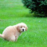 ¿Por qué tu perro te mira mientras hace caca?
