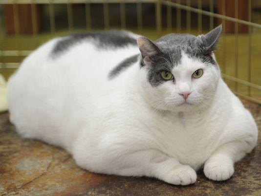 ¿Cuáles son las causas de obesidad en perros y gatos?