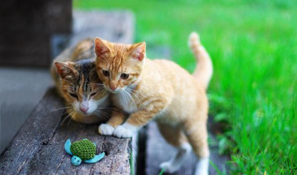 ¿Por que a los gatos les gustan los juguetes con hierba gatera / catnip?