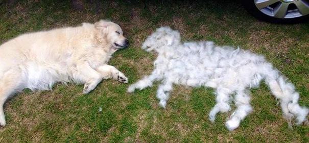 Caída de pelo en perros | Causas y cura