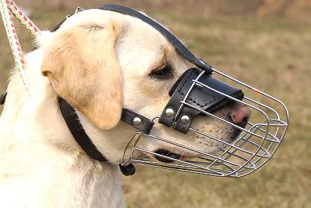 Los beneficios de usar bozal para perros