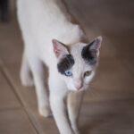 ¿Por qué mi gato está perdiendo peso?