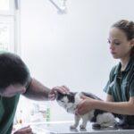 10 formas más comunes en las que los gatos son envenenados