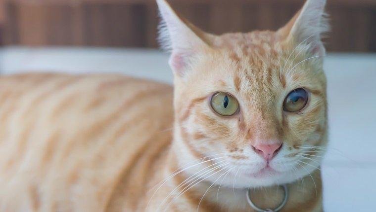 imagen de gato que uno de los ojos de gato está defectuoso
