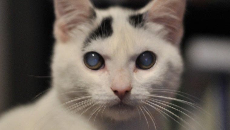Una hermosa foto de mi gatito ciego de rescate Rocky.