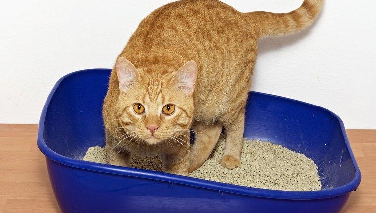 Gatito en arena de plástico azul gato