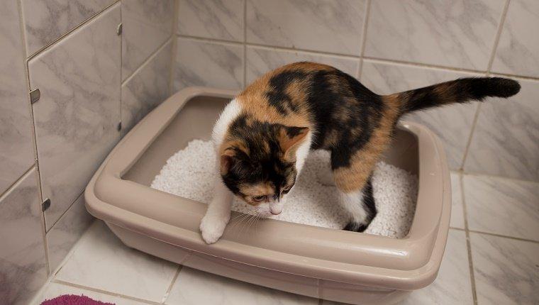 Katzen an das Katzenklo gewöhnen