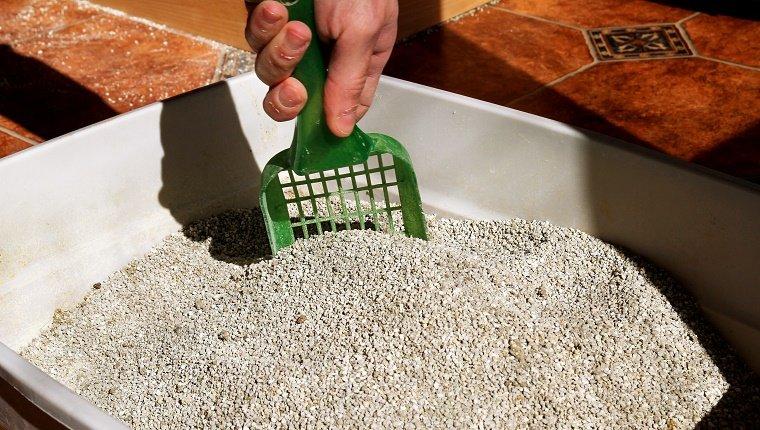 Limpieza de la caja de arena para gatos. La mano es la limpieza de la caja de arena para gatos con una espátula verde. Aseo gato limpieza arena gato.