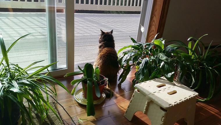 Vista trasera del gato sentado en la puerta