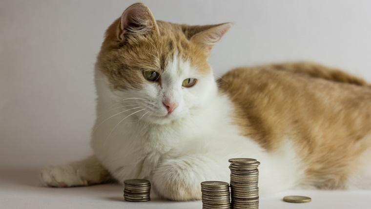 Gato rojo y montón de monedas contra un blanco
