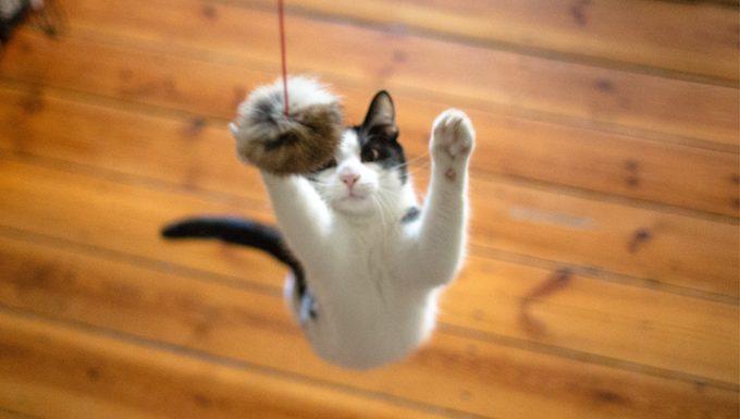 gato saltando de juguete